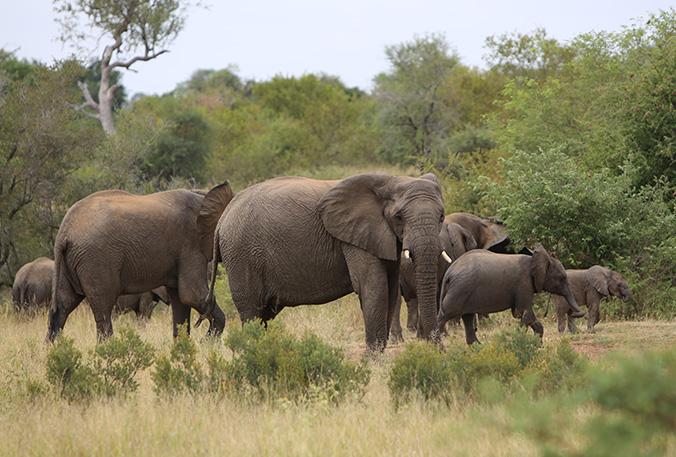 hunting_safari_namibia