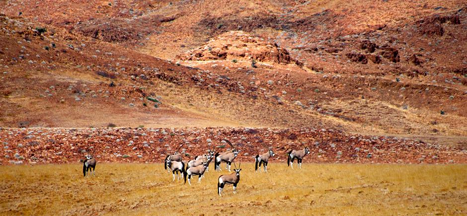 omujeve-hunting-safaris-namibia-11