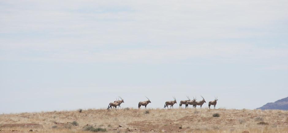 omujeve-hunting-safaris-namibia-15