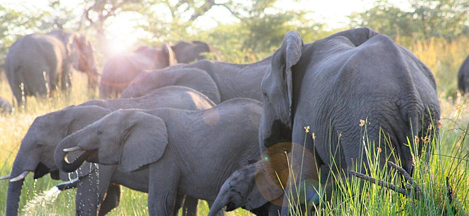 omujeve-hunting-safaris-namibia-6