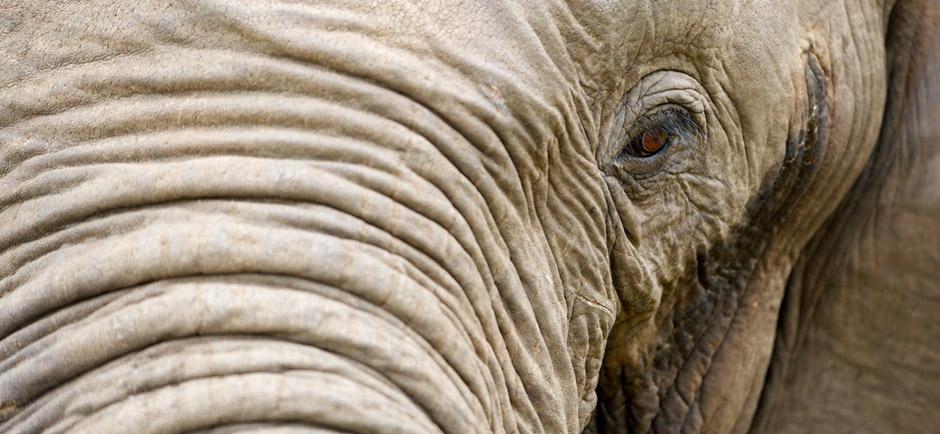 omujeve-hunting-safaris-namibia-7